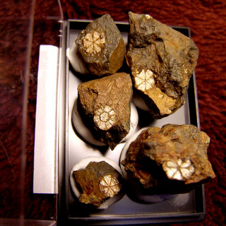 mineralsP4010014.jpg